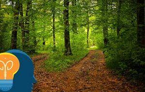 Dos caminos en el bosque