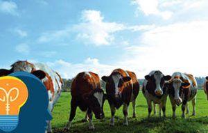 Acertijo vacas