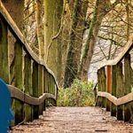 Acertijo del puente